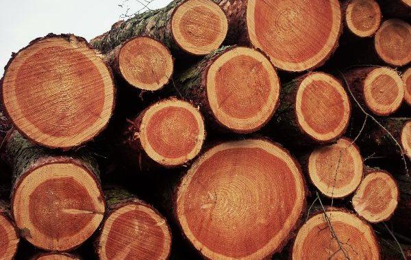 Методы вычисления объема различных видов лесопродукции